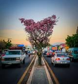 Quiere Rotarac un Morelos rosa