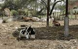 Tepalcingo es el segundo municipio con más cabezas de bovino en el estado, y su actividad comercial fortalece la venta así como la producción