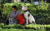 Cuando las mascotas son educadas sienten que son importantes para ti