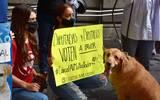 Integrantes de la Coalición por la Defensa Animal exigen a los legisladores aprobar reforma en la materia