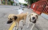 """La asociación civil """"Amigos de los Perros Morelos"""" confía en que la reforma al código penal de Morelos reduzca los casos"""